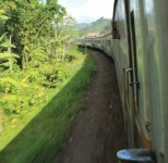 Jungle railway